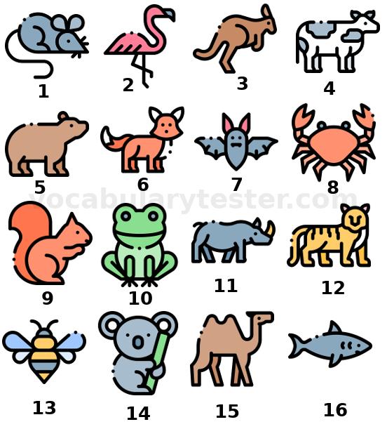 Animals vocabulary 1